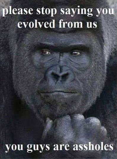 gorilla - thoughts on evolution