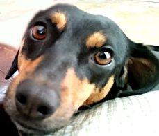 dog_face_cute_2